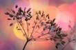 canvas print picture - Samen von wilder Pflanze im warmen Licht der Sonne Morgen oder Abend Stimmung Ernte geborgen