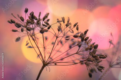 Samen von wilder Pflanze im warmen Licht der Sonne Morgen oder Abend Stimmung Ernte geborgen