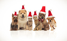 Lovely Group Of Brown Cats And Dogs Wearing Santa Hats