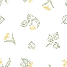 Natural Seamless Pattern With Blooming Linden Flowers And Leaves Drawn With Contour Lines On White Background. Backdrop With Tree Foliage. Decorative Vector Illustration For Wrapping Paper, Wallpaper.
