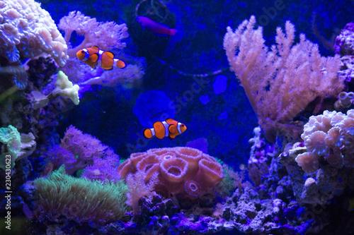 Photo  Marine Fish