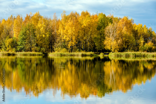Fototapety, obrazy: Autumn landscape-the forest on the shore of lake