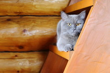 A Grey Cat Sitting On The Step...
