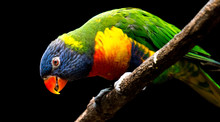 Colorful Parrot On A Branch