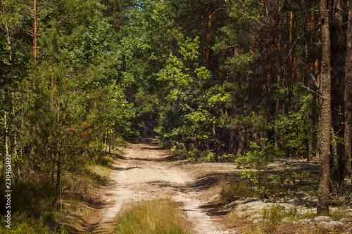 Foto op Canvas Weg in bos Forest road. Sun rays illuminate the dark forest. Background. Summer