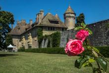 Rosier Au Château De Ripaille à Thonon Les Bains En Haute Savoie , Au Bord Du Lac Léman