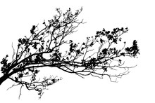 Realistic Oak Tree Branches Silhouette On White Background (Vector Illustration).