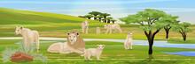 Pride Of A Lion, Three Lioness...