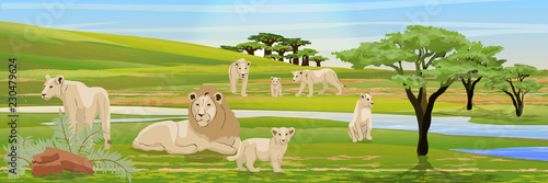 Fototapeta Pride of a lion, three lionesses and their cubs in the African savannah