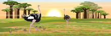 A Flock Of Birds Of African Ostriches Their Chicks Walks On The Savannah. High Baobabs At Sunset Or Dawn. Wildlife Of Africa. Realistic Vector Landscape.