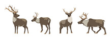 Set Of Wild Reindeer. Caribou....