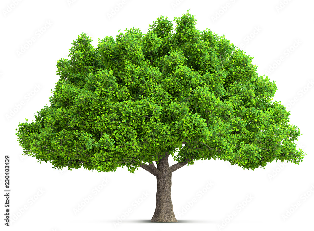 Fototapety, obrazy: tree isolated 3D illustration