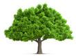 Leinwandbild Motiv tree isolated 3D illustration