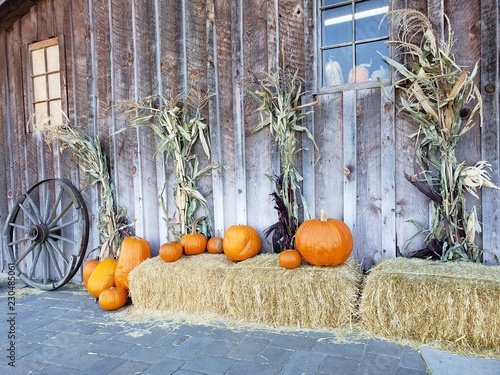 Slika na platnu An autumn decorative harvest display of pumpkins, hay bails, corn stalks, and a wagon wheel against a wooden barn