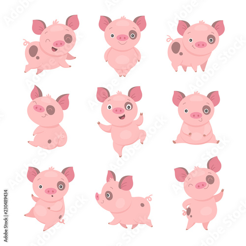 Photo Cute piggy collection