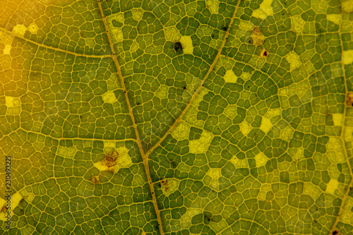 Tuinposter Macrofotografie Beautiful detailed golden fall leaf macro - texture