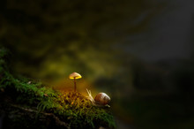 Fantasy Forest With Slug And Glowing Mushroom