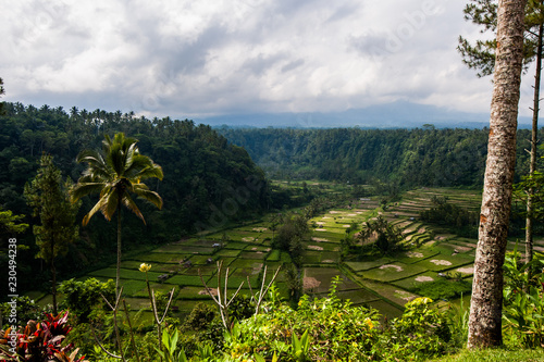 Aluminium Prints Indonesia Rice Fields in Bali