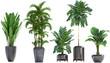 Leinwandbild Motiv Collection Exotic plants in a pot on a white background