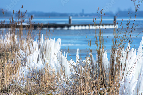 Frozen lake in the Netherlands with a jetty on the background and a dry grass in a foreground.