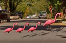Plastic Flamingo And Babies Cr...