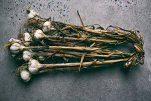 Bunch Of Dried Garlic
