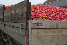 Close Up Of Truck Full Of Red Ripe Apples