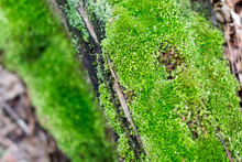 Textured Green Moss On A Woodland Tree Log With An Abstract Background ~WOODLAND~