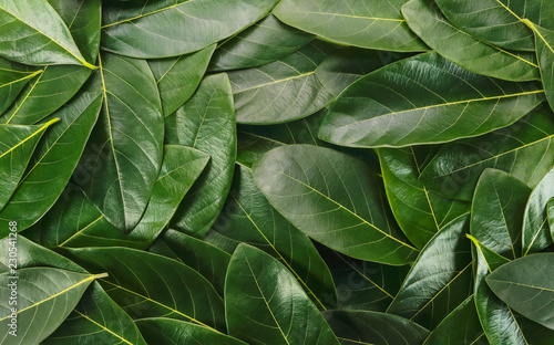 Türaufkleber Makrofotografie close up green leaves using as background, flat lay and top view