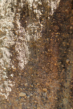 Closeup Of Natural Soil And Stone Wall In Sunlight. Vertical View.