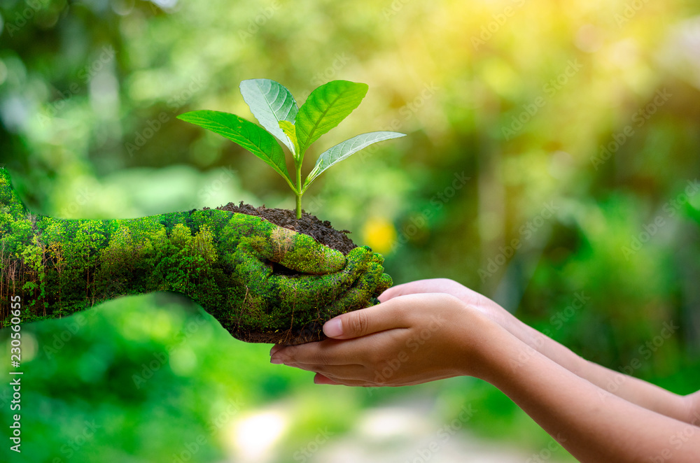 Fototapeta environment Earth Day In the hands of trees growing seedlings. Bokeh green Background Female hand holding tree on nature field grass Forest conservation concept
