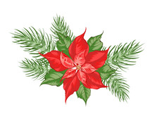 Composition Of Red Poinsettia Flower Isolated Over White Background. Vector Illustration.