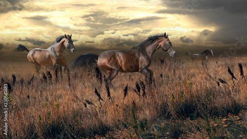 Fotografía  free horses gallop across the steppe