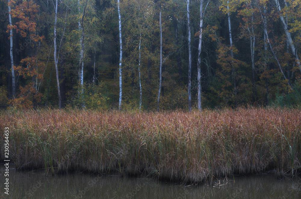 Fototapeta Jesienny brzeg