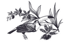 Realistic Hand Drawing Of Toucan And Beautiful Orchid Isolated On White Background.