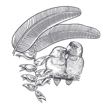 Realistic Hand Drawing Of Parrots Lovebirds And Branch Tree Isolated On White Background.