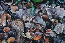 Beautiful Fallen Leaves Covere...