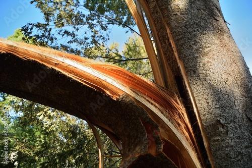 台風によって倒されたり折れた樹木 Tapéta, Fotótapéta