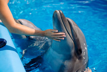 Female Coach With Dolphin. Wom...