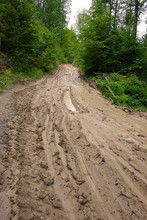 Muddy Forest Road