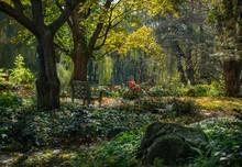 Magical Autumn Garden In The H...