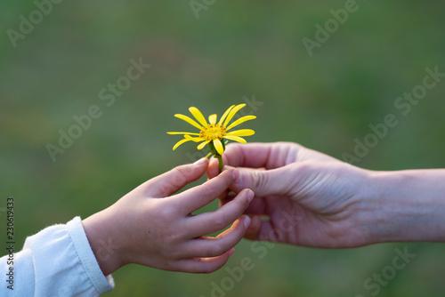 Fotografia 黄色い花を手渡す親子
