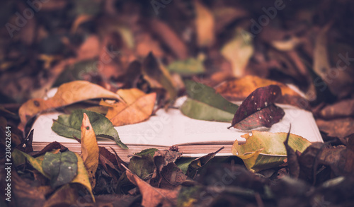 Fotografie, Obraz  Old books against the background of fallen yellow leaves in the autumn garden