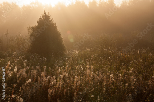 Meadow sunrise at foggy morning landscape