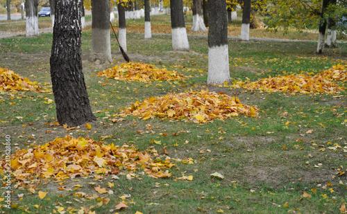 Foto op Aluminium Kiev Autumn in the city. Fallen leaves piled up along the street. Kyiv. Ukraine.