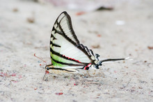 Rare And Colorful Butterfly In...