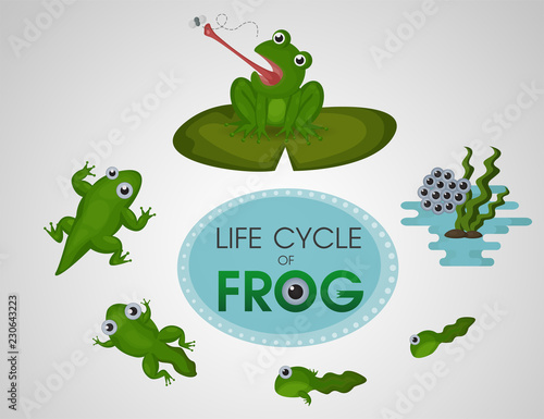 Valokuvatapetti Life cycle of frog. Cartoon cute vector Illustion EPS10.