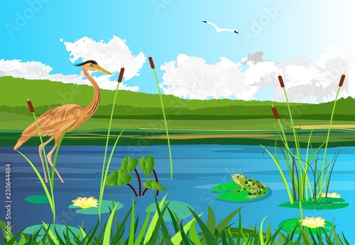 Red heron on the lake, seagull flying, lake, gragonflies, wetland landscape, vector wildlife