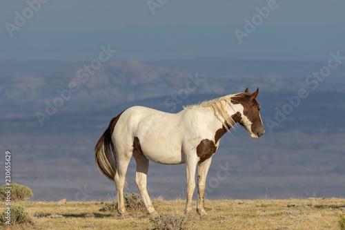 Horses Wall Murals Gallery ! Horses