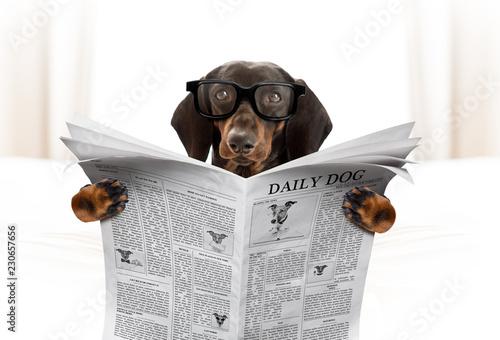 Fotobehang Crazy dog dog reading newspaper